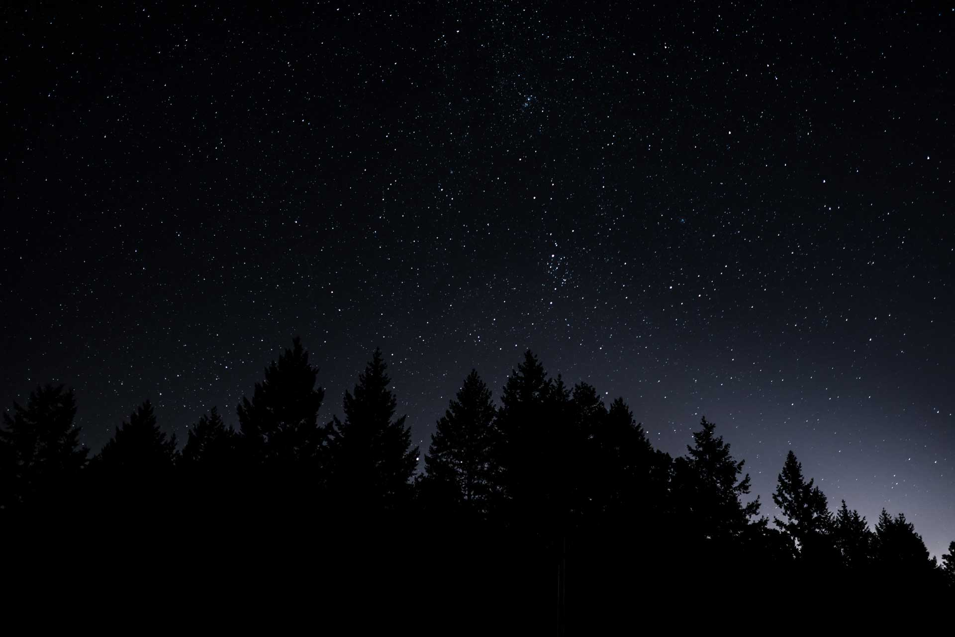 starry night sky with silhouette of trees