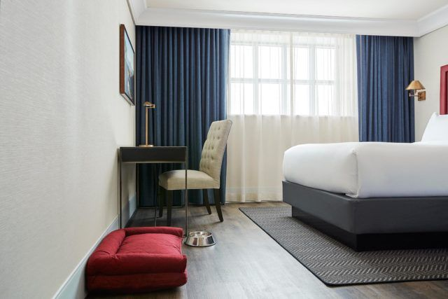 hotel room with red dog bed silver bowl and desk with beige chair