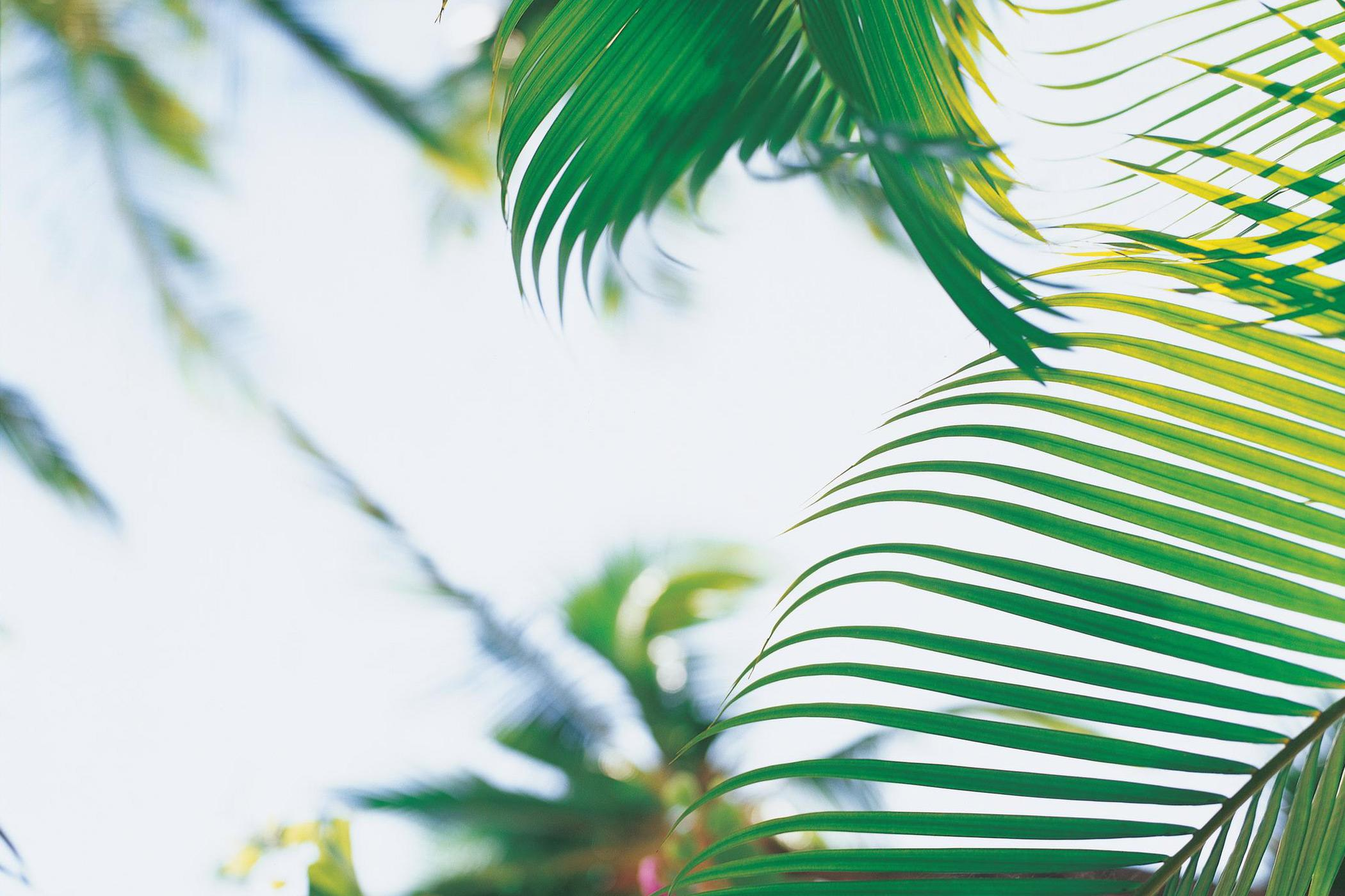 The-Royal-Hawaiian-a-Luxury-Collection-resort-palm