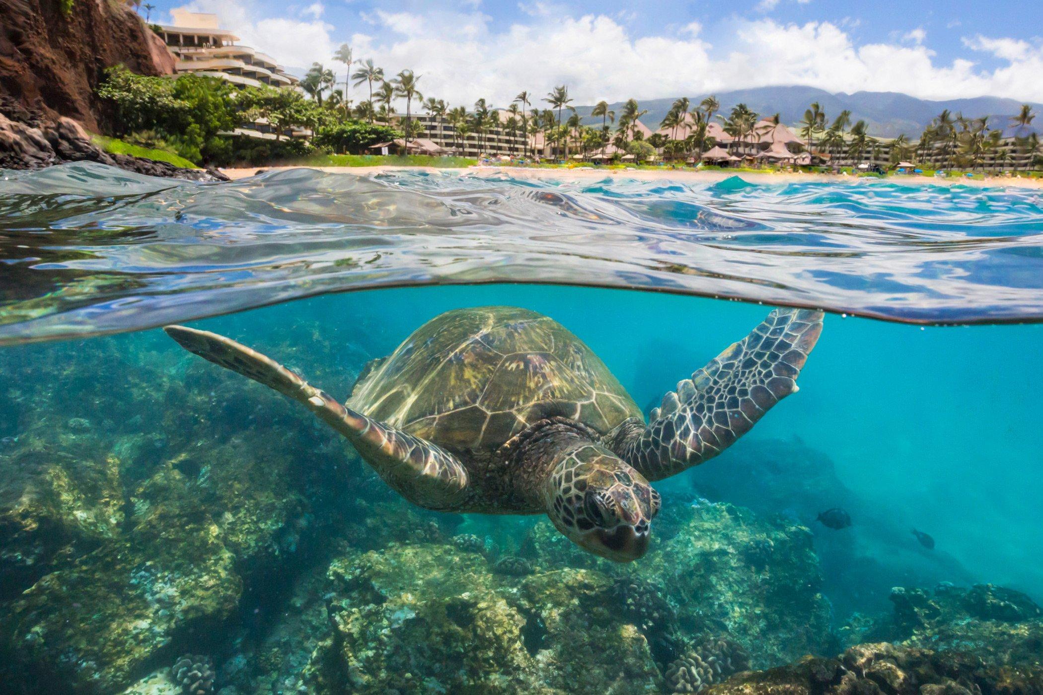 royal-hawaiian-resort-honolulu-sea-life-turtle
