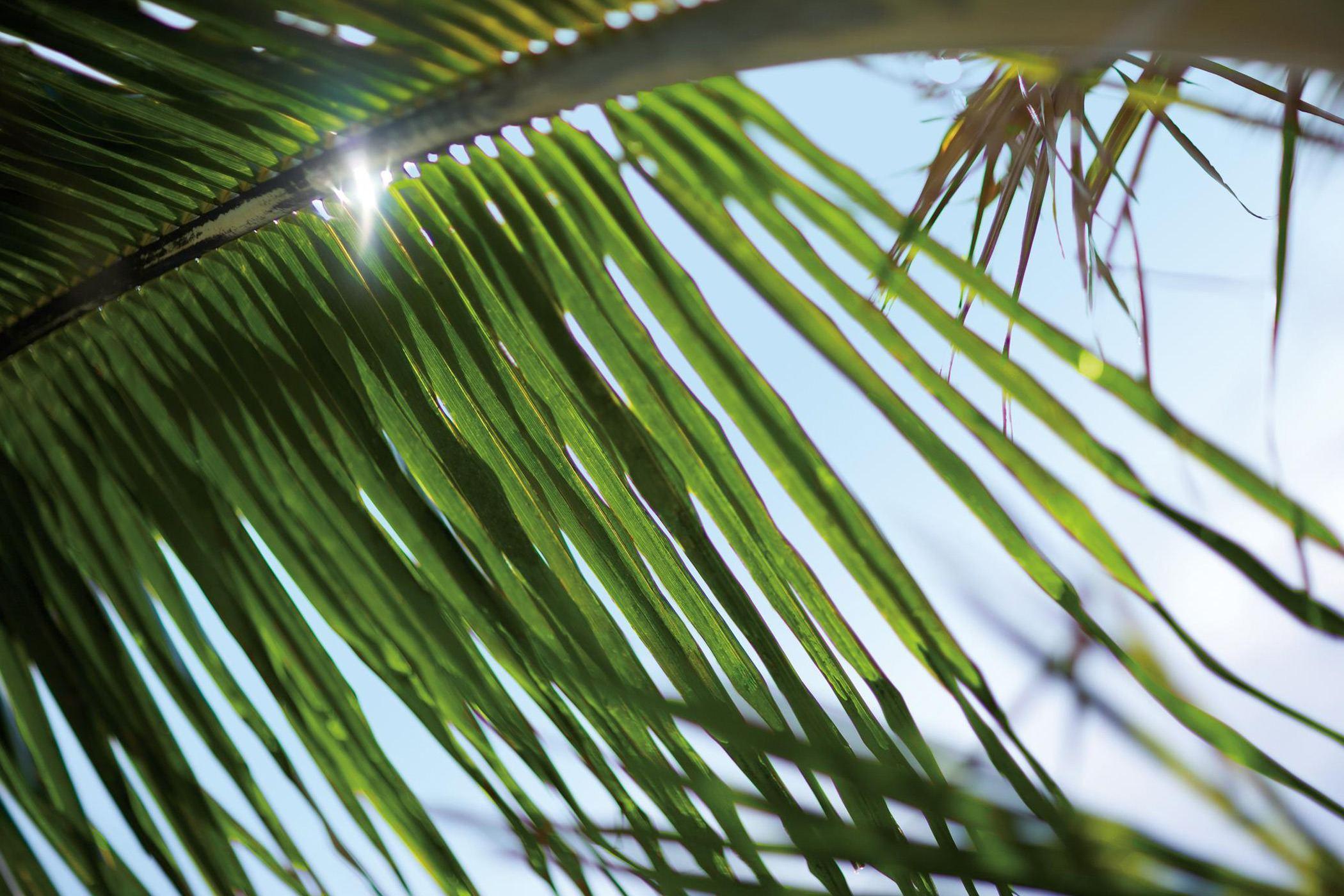 the-royal-hawaiian-resort-honolulu-palm