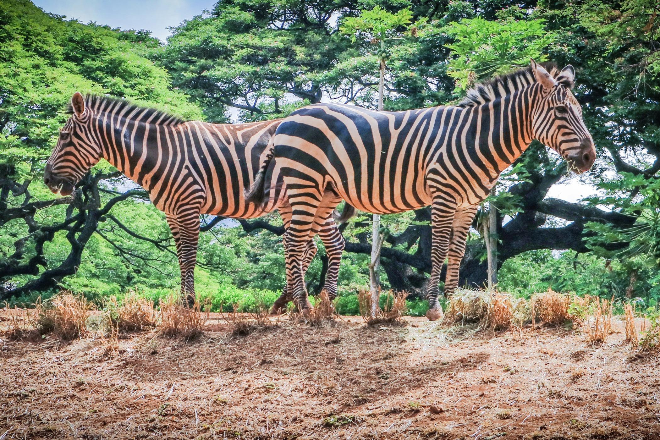 The-Royal-Hawaiian-Resort-Local-Attraction-Honolulu-Zoo