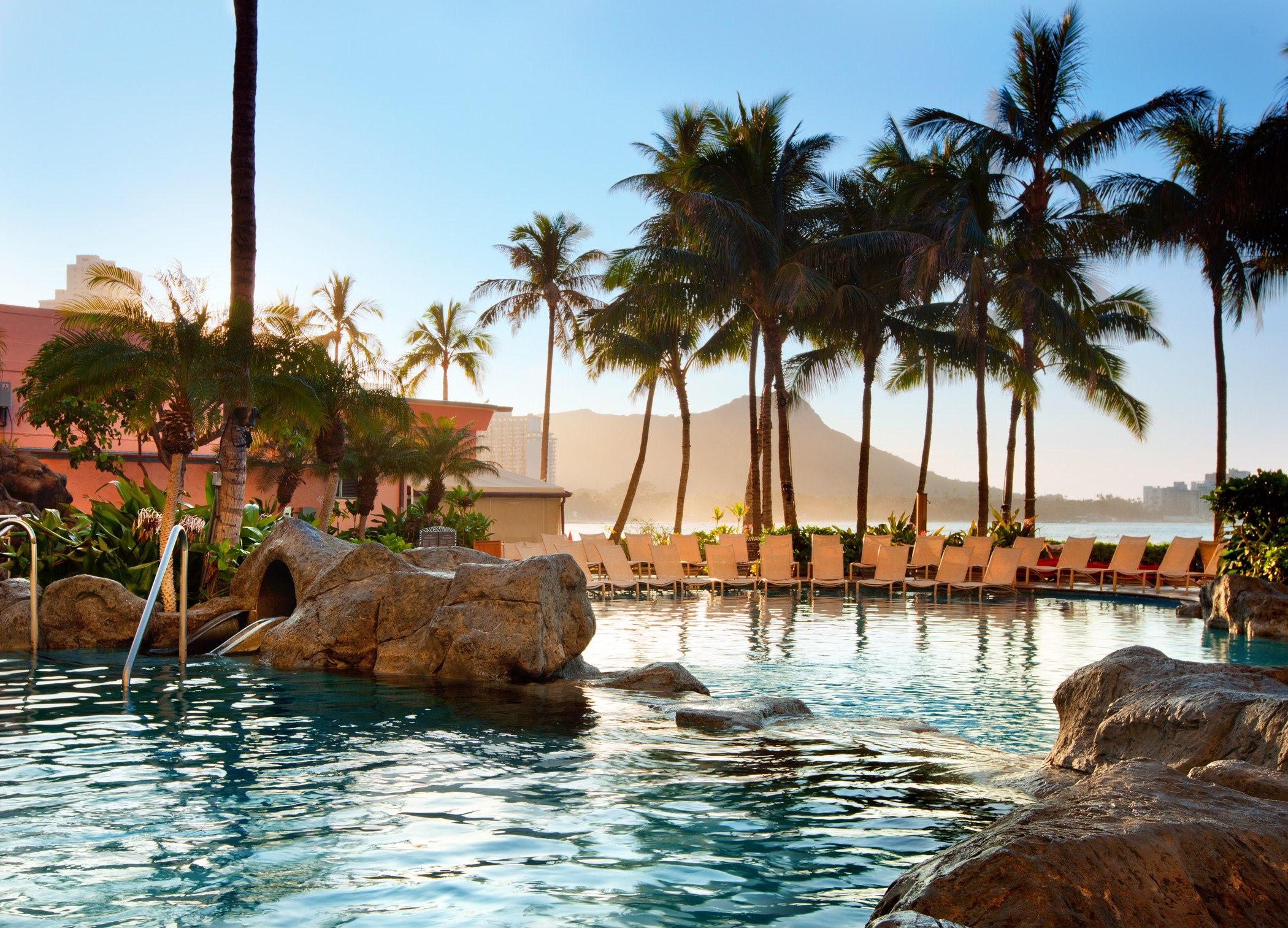 green coconut palm trees around pool
