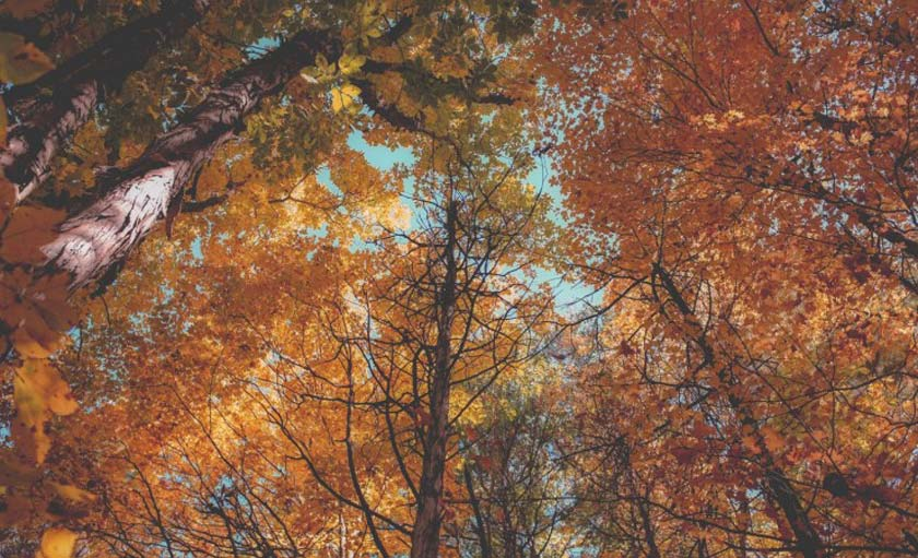 tree tops with orange, red, and yellow leaves