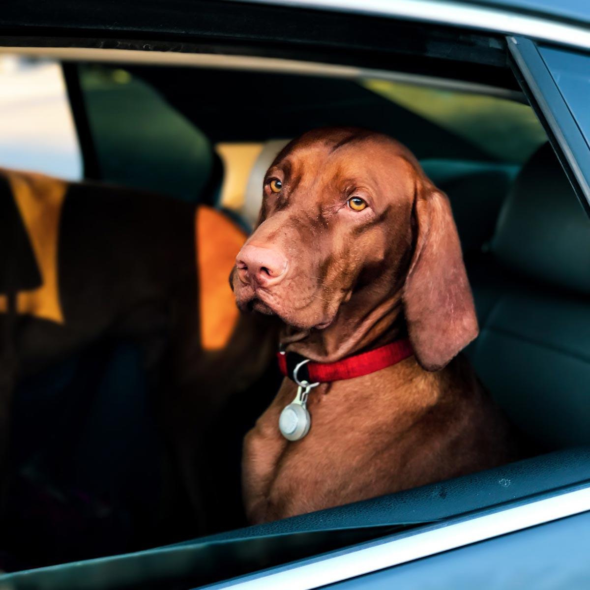 dog sitting in back seat of stylish car