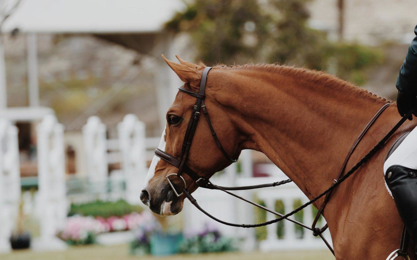 horse during equestrian competition
