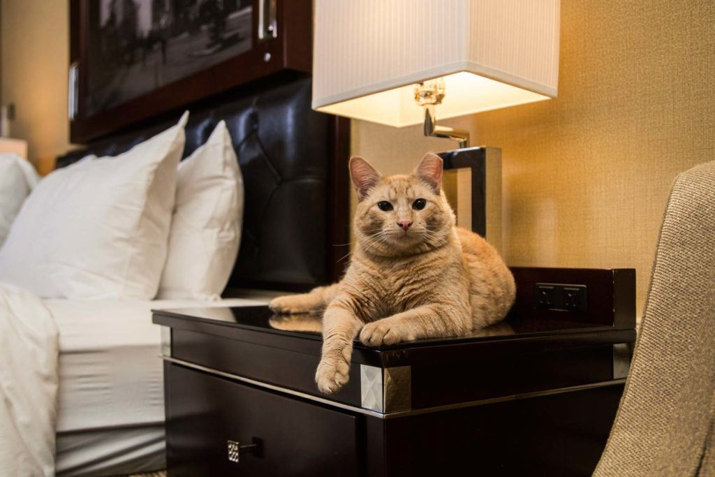 orange cat laying on nightstand in guest room