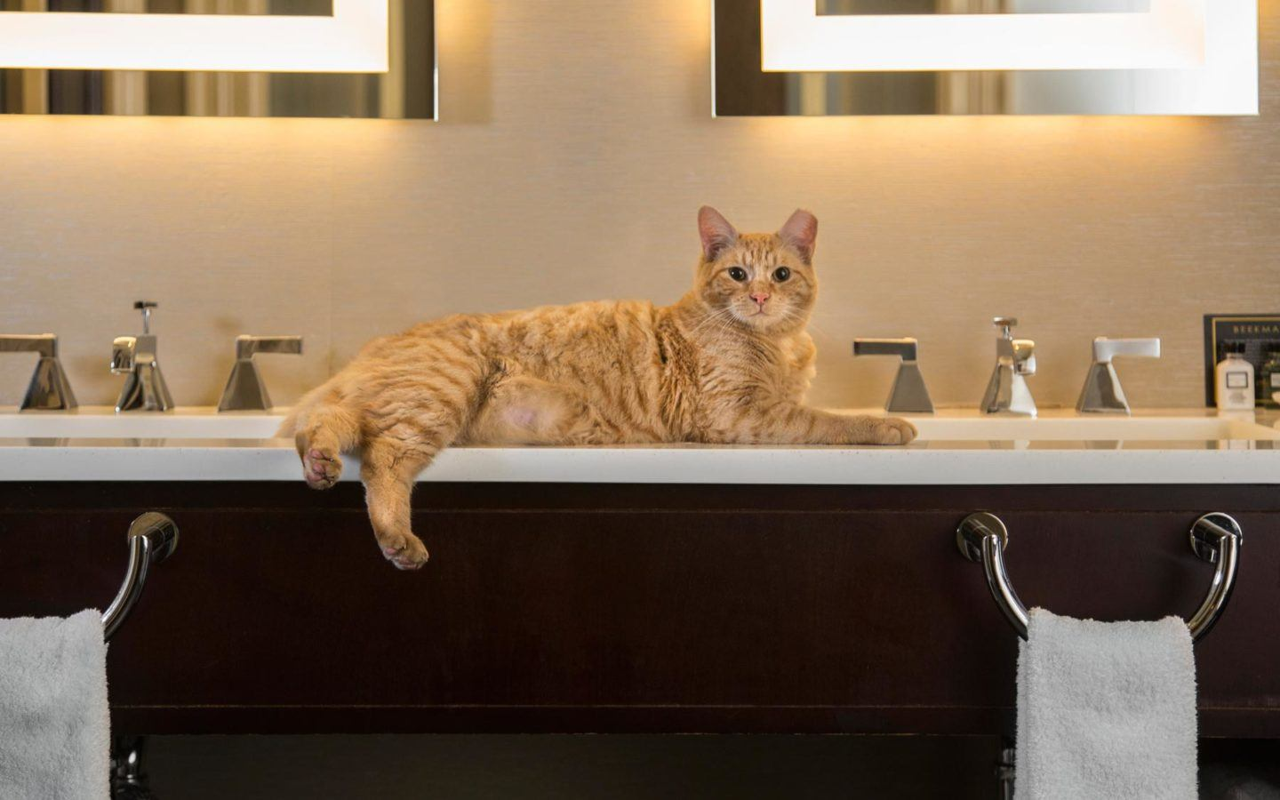orange cat laying on the bathroom double sink counter top