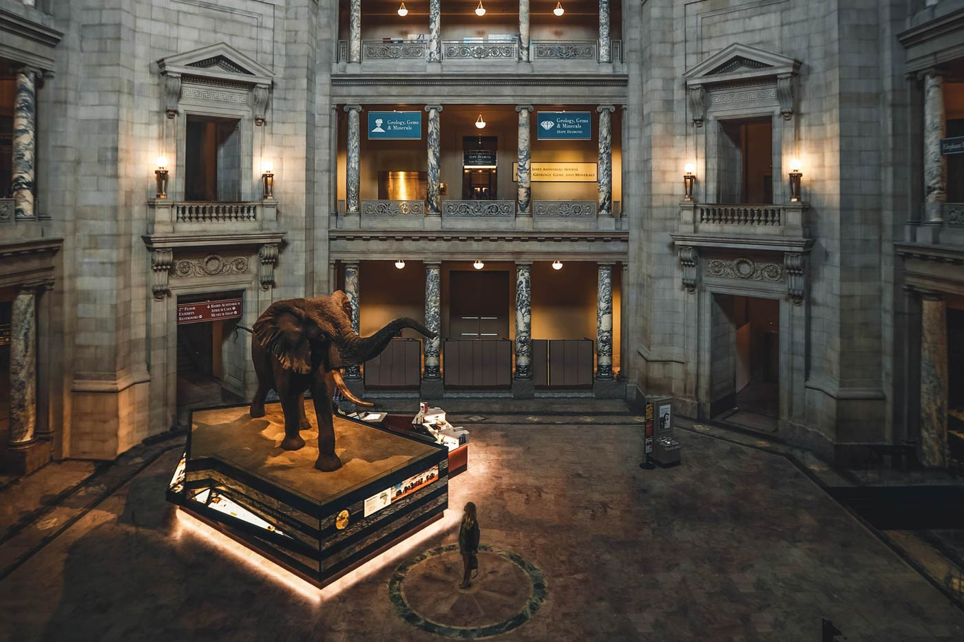 black elephant statue in the center of the Smithsonian museum