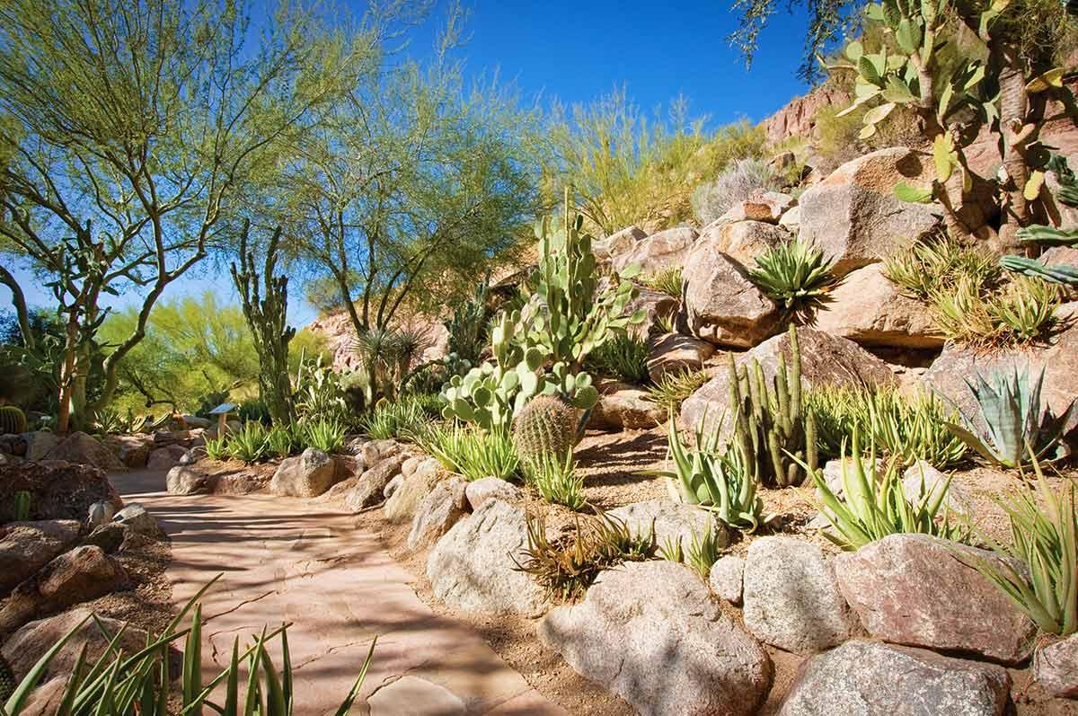 Cactus garden path