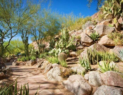 path leading through a cactus garden