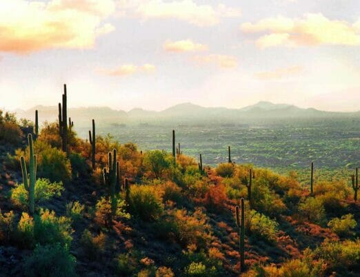 hill lined with cacti overlooking Scottsdale desert