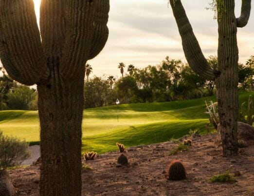 Desert Golf course green surrounded by cacti