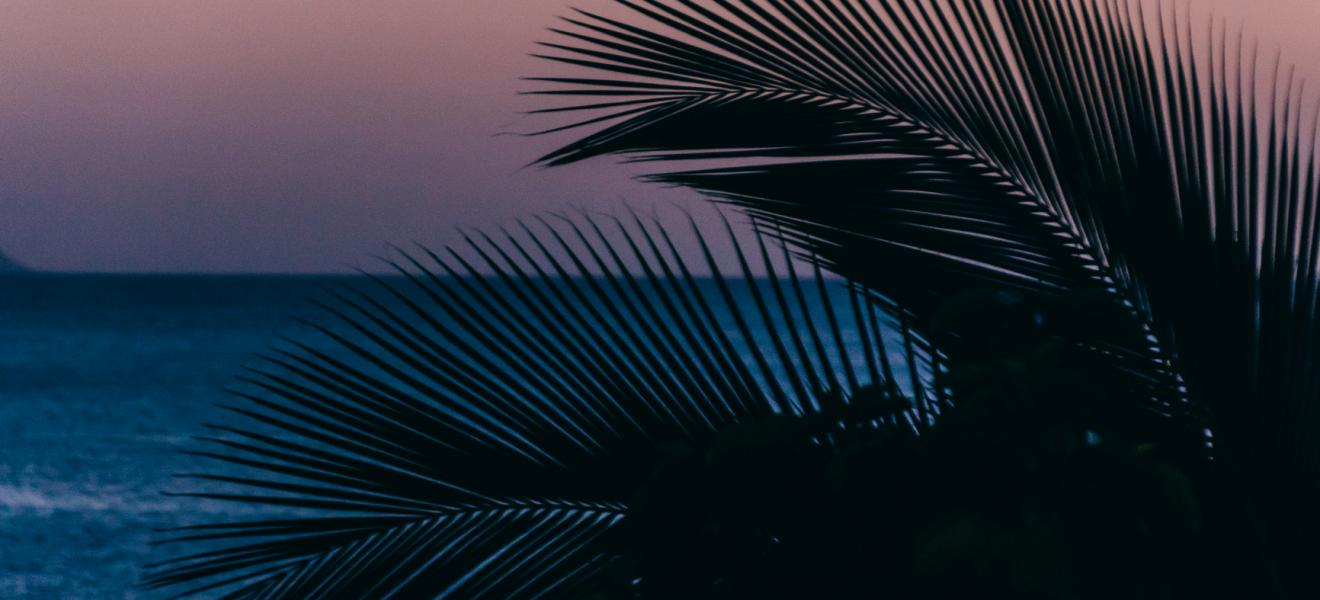 Palm tree leaves silhouette and sea at dusk