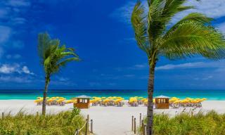 Miami Beach Pet Friendly Hotels Royal Palm South Beach Miami