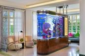 fish tank near window with yellow tropical fish colourful coral and marble stand surrounded by chairs and a couch