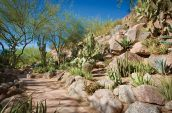 canyon-suites-cactus-garden